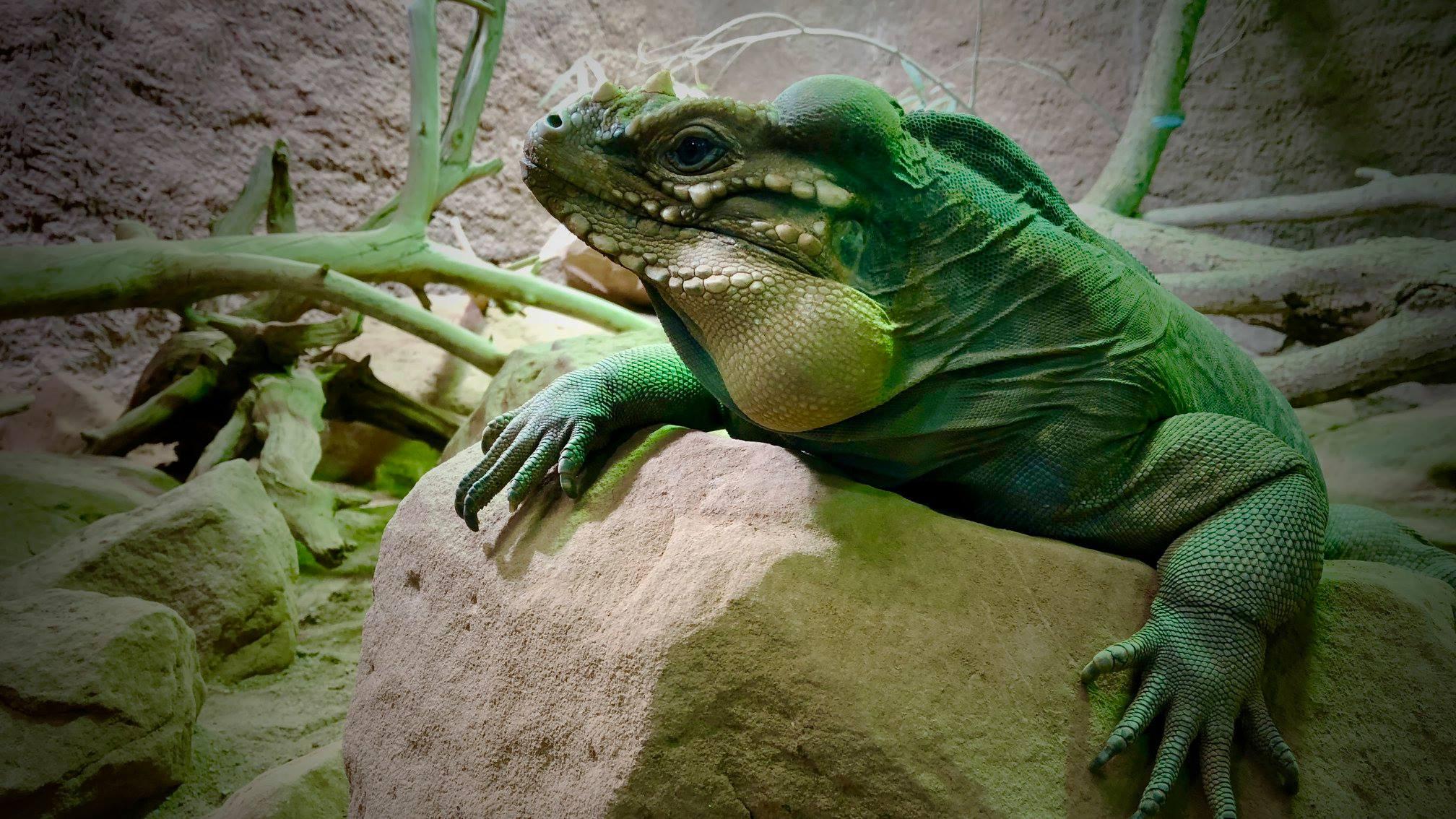 Freie Trauung Reptilium Landau in der Pfalz